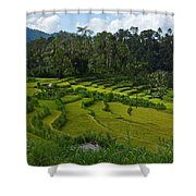 Rice Fields In Agricultural Bali Shower Curtain