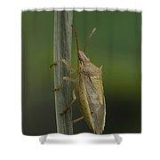 Rice Stink Bug Shower Curtain