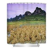 Rice, Yangshuo, Guangxi, China Shower Curtain