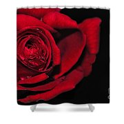 Rich Red Rose Shower Curtain
