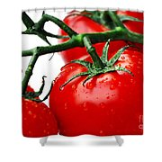 Rich Red Tomatoes Shower Curtain