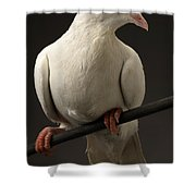 Ring-necked Dove Shower Curtain