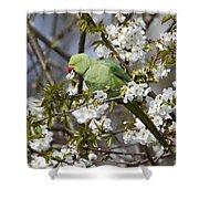 Ring-necked Parakeet Shower Curtain