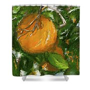 Rio Grande Valley Oranges Shower Curtain