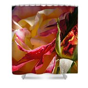 Rio Samba Rose And Bud Shower Curtain