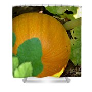 Ripe On The Vine Shower Curtain