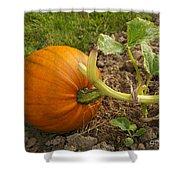 Ripe Pumpkin Shower Curtain