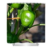 Ripened Peppers Shower Curtain