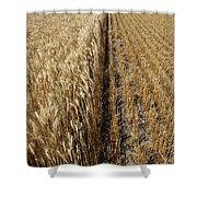 Ripened Wheat And Stubble In Saskatchewan Field Shower Curtain