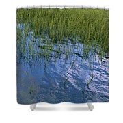 Rippling Water Among Aquatic Grasses Shower Curtain