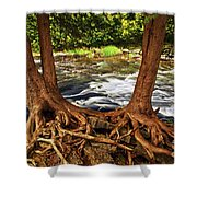 River And Roots Shower Curtain