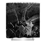 River Bed Sycamore Leaf Shower Curtain