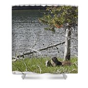 River Otter Shower Curtain