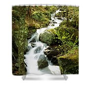 River With Trees In The Forest Shower Curtain