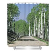 Road Through An Aspen Forest, Manti La Shower Curtain