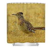 Roadrunner Hen Shower Curtain