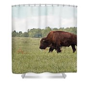 Roaming The Plains Shower Curtain
