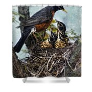 Robin And Babies In Nest Shower Curtain