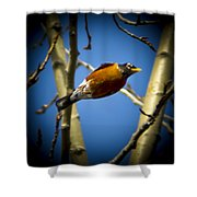 Robin Dives Into A Budding Spring Shower Curtain