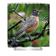 Robin Shower Curtain