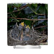 Robin Nestlings Shower Curtain by Ted Kinsman