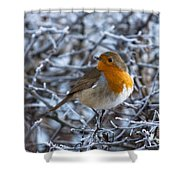 Robin On A Frosty Morning Shower Curtain