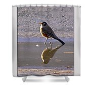 Robin Reflection Shower Curtain
