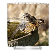 Robin Shaking Water Off Shower Curtain