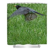 Robin With A Low Level Approach Shower Curtain