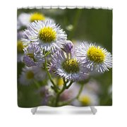 Robin's Plantain - Alabama Wildflowers Shower Curtain