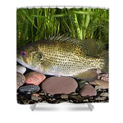 Rock Bass Shower Curtain