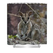 Rock Wallaby V2 Shower Curtain