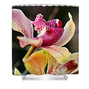 Rocking Chair Orchid Shower Curtain