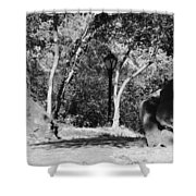Rocks And Trees In Black And White Shower Curtain