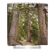 Rocky Mountain Forest Walk Shower Curtain