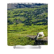 Rocky Mountain Goat Glacier National Park Shower Curtain