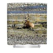 Rocky Mountains Elk Shower Curtain
