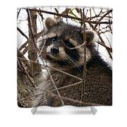 Rocky Raccoon Shower Curtain