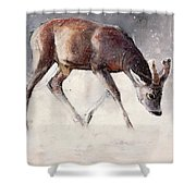Roe Buck - Winter Shower Curtain by Mark Adlington