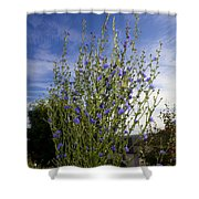 Romaine Lettuce Flowers Shower Curtain by Donna Munro