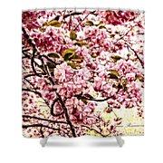 Romantic Cherry Blossoms Shower Curtain