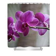 Romantic Purple Orchids Shower Curtain