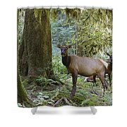 Roosevelt Elk Cervus Elaphus Shower Curtain
