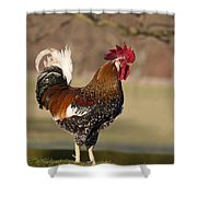 Rooster Gallus Gallus Northumberland Shower Curtain