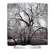 Roots And Flutes  Shower Curtain