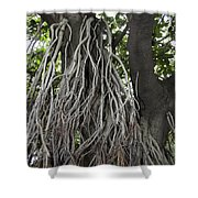 Roots From A Large Tree Inside Jallianwala Bagh Shower Curtain