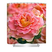 Rosa 'brass Band' Shower Curtain by Alan Detrick and Photo Researchers