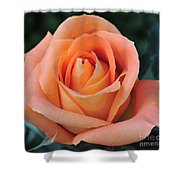 Rose 33 Shower Curtain
