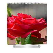 Rose And Her Buds Shower Curtain