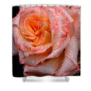 Rose And Raindrops On Black Shower Curtain